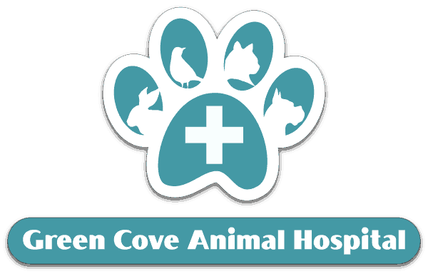 Green Cove Animal Hospital