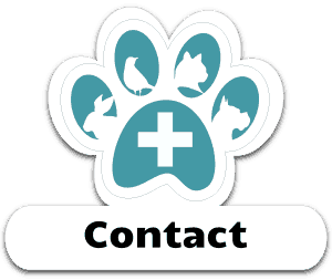 Contact Our Veterinarian