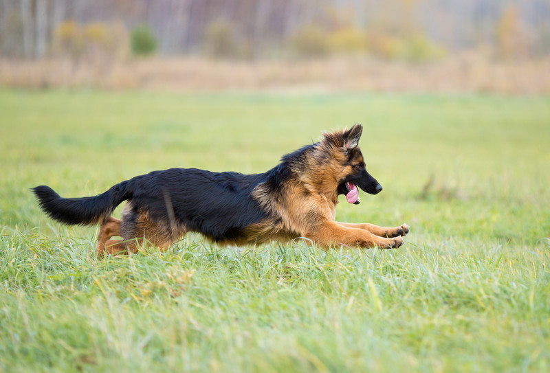 Pet Laser Therapy in Green Cove Springs, FL